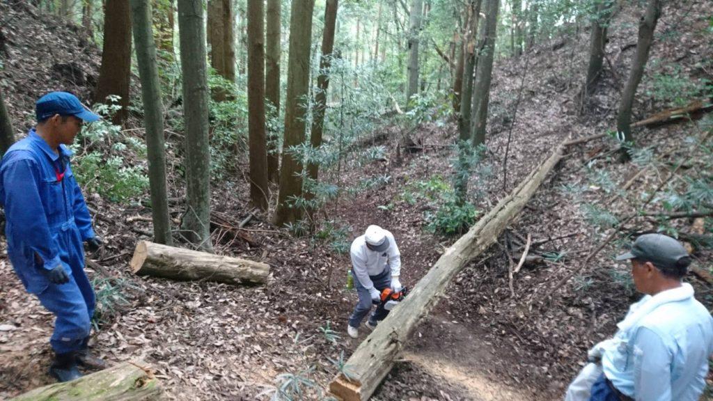 倒木をチェーンソーで切ります