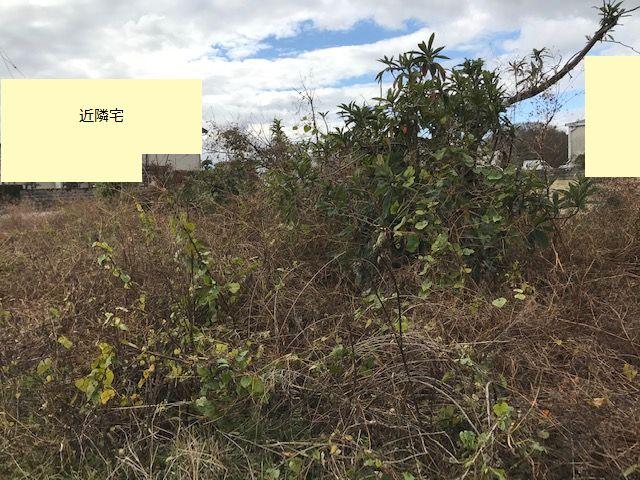 徳島市国府町の休耕地。